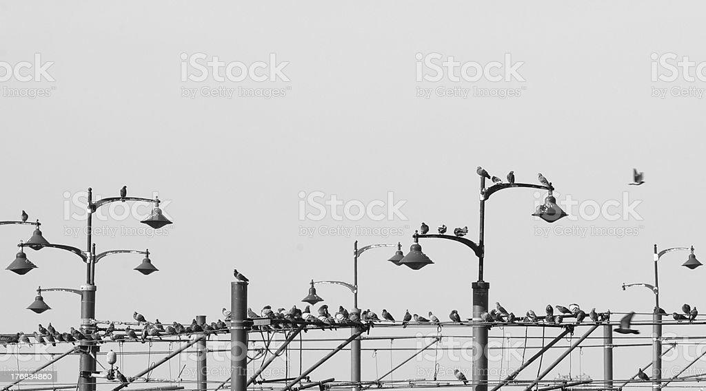 Birds on Poles (Black & White) stock photo