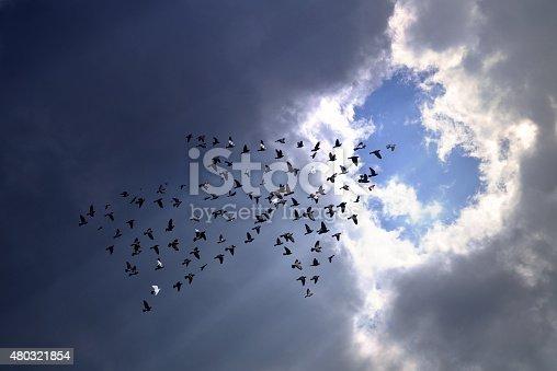 istock Birds on sky , growth concept 480321854