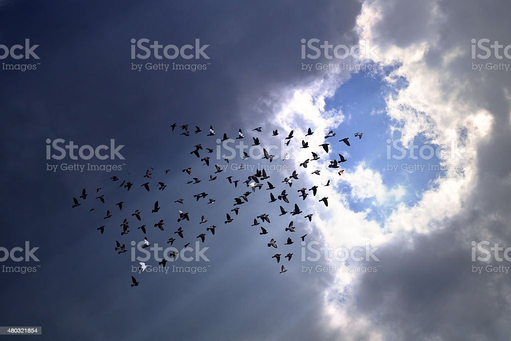 Birds on sky , growth concept stock photo