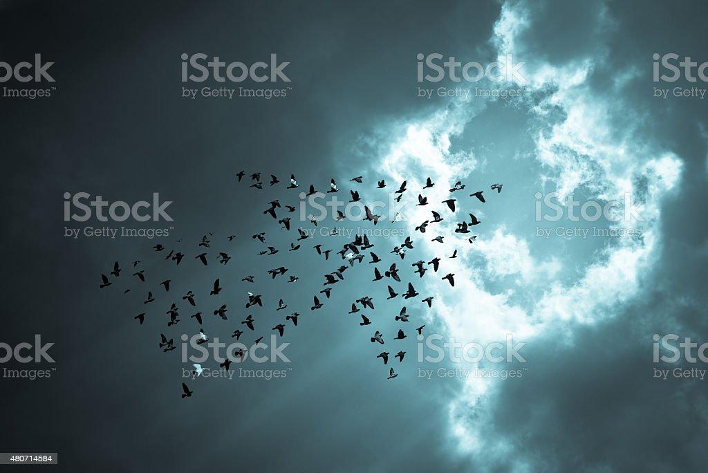 Birds on sky , growth concept stock photo