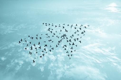 istock Birds on sky , growth development concept 490248680