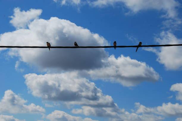 Pájaros sobre cable de teléfono - foto de stock