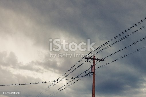 A large flock of black birds sitting on multiple telephone wires under a cloudy overcast sky. No people in image.