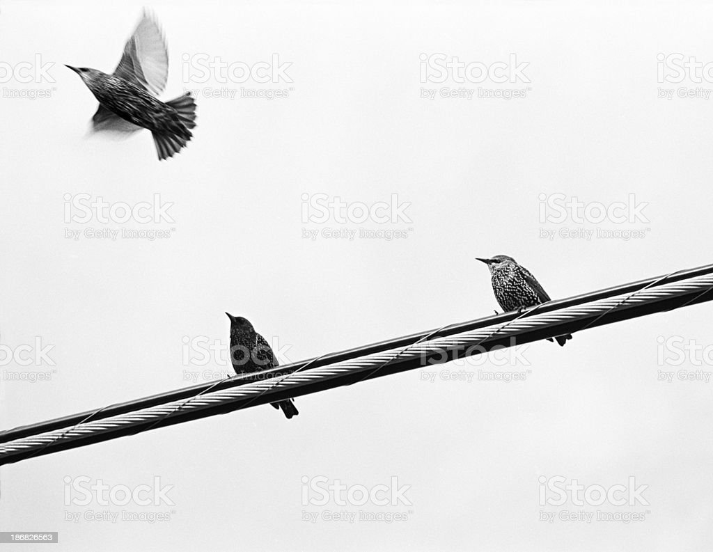 Birds on Telephone Wires Take flight stock photo