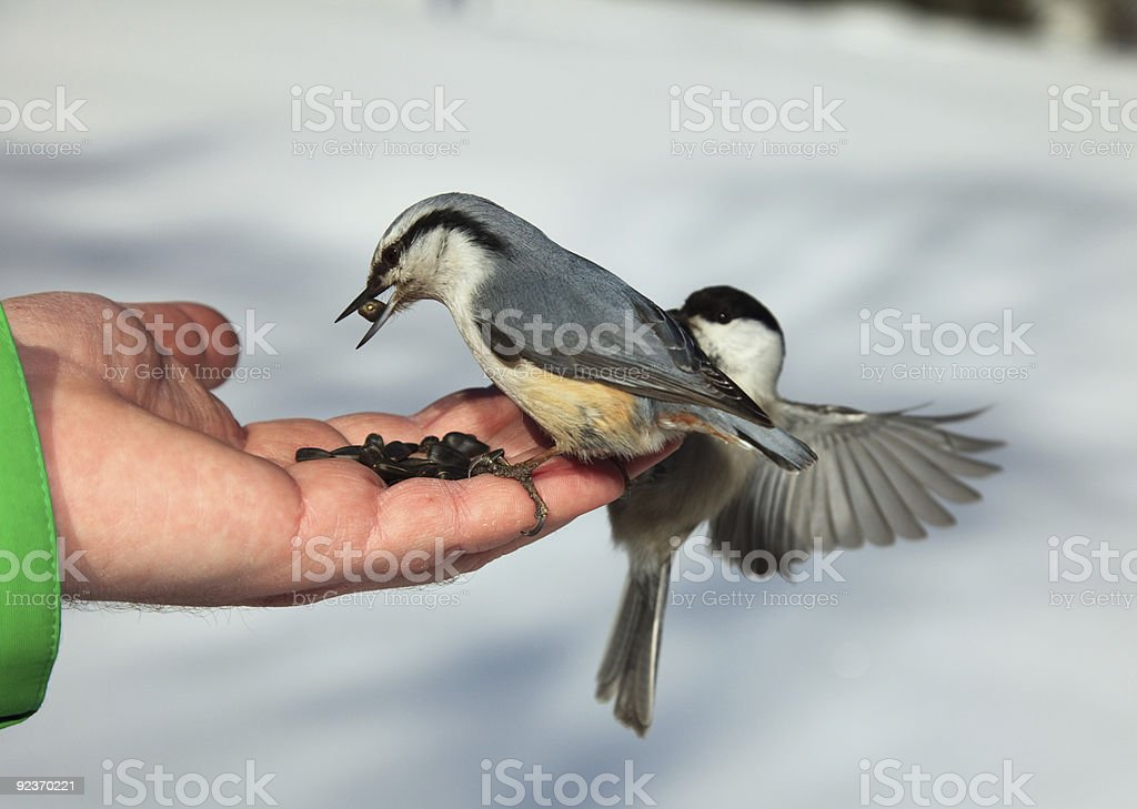 Birds on the hand royalty-free stock photo
