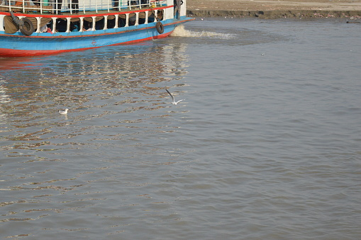 Birds on the river