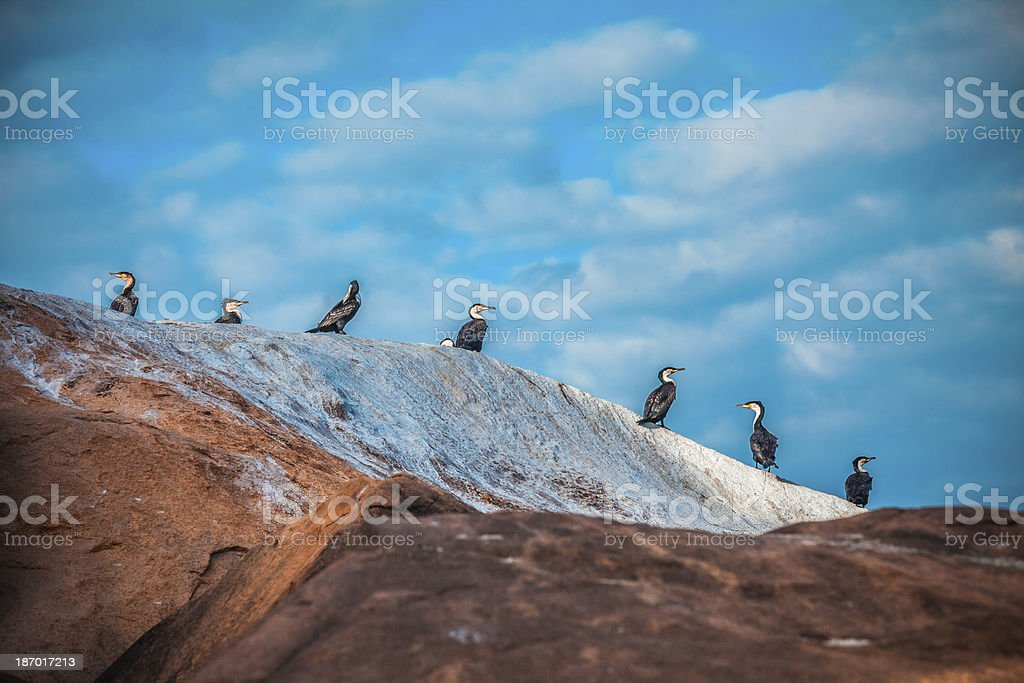 Birds on the rock stock photo