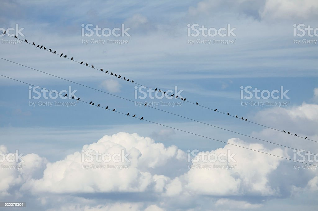 Ptaki na przewody zbiór zdjęć royalty-free