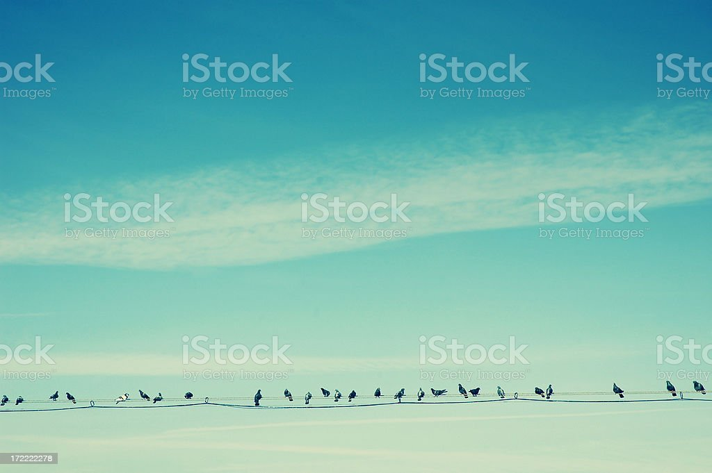 Birds on Wire stock photo