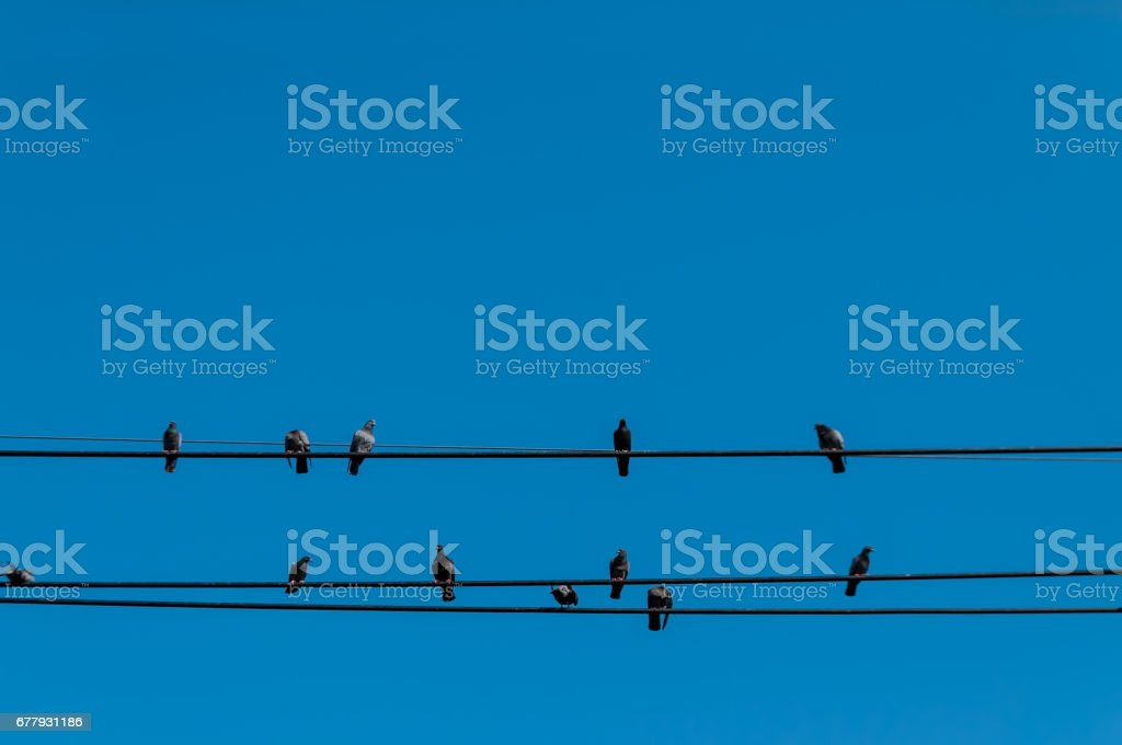 birds on wires isolated against clear blue sky royalty-free stock photo
