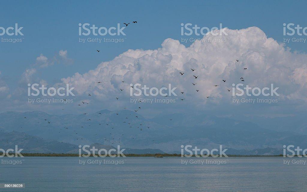 Birds over Skadar Lake stock photo