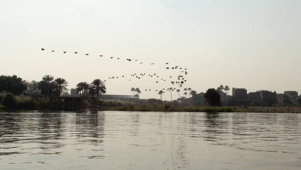 Birds Over the Nile River in Cairo Egypt stock photo
