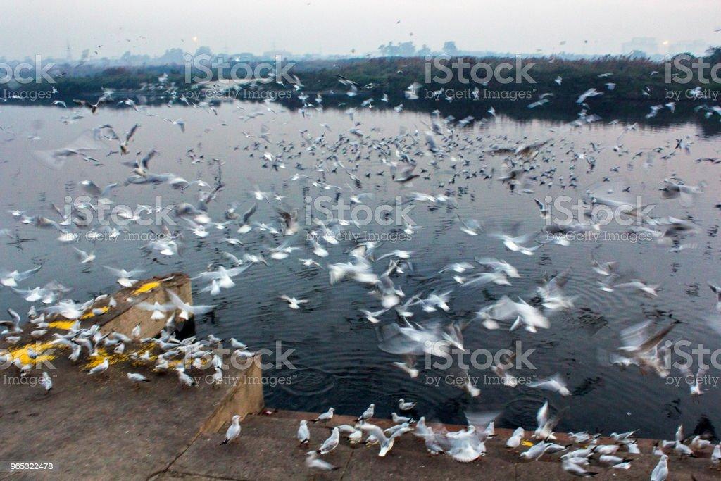 Bird's Paradise zbiór zdjęć royalty-free