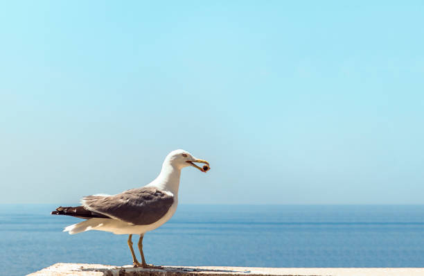 birds picking up cigarette butts - cicca sigaretta foto e immagini stock