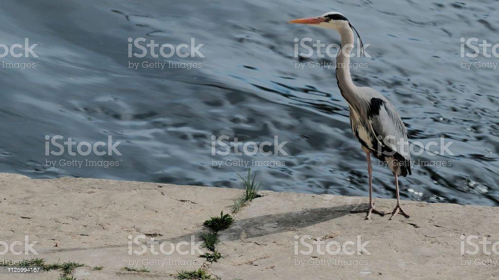 Oiseaux - Photo