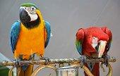istock Birds 1292379140