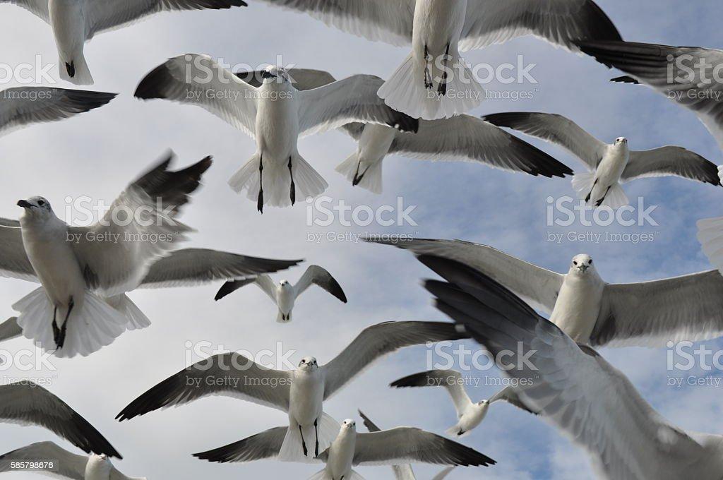 Birds Seagulls feeding. Animal Body Part Stock Photo