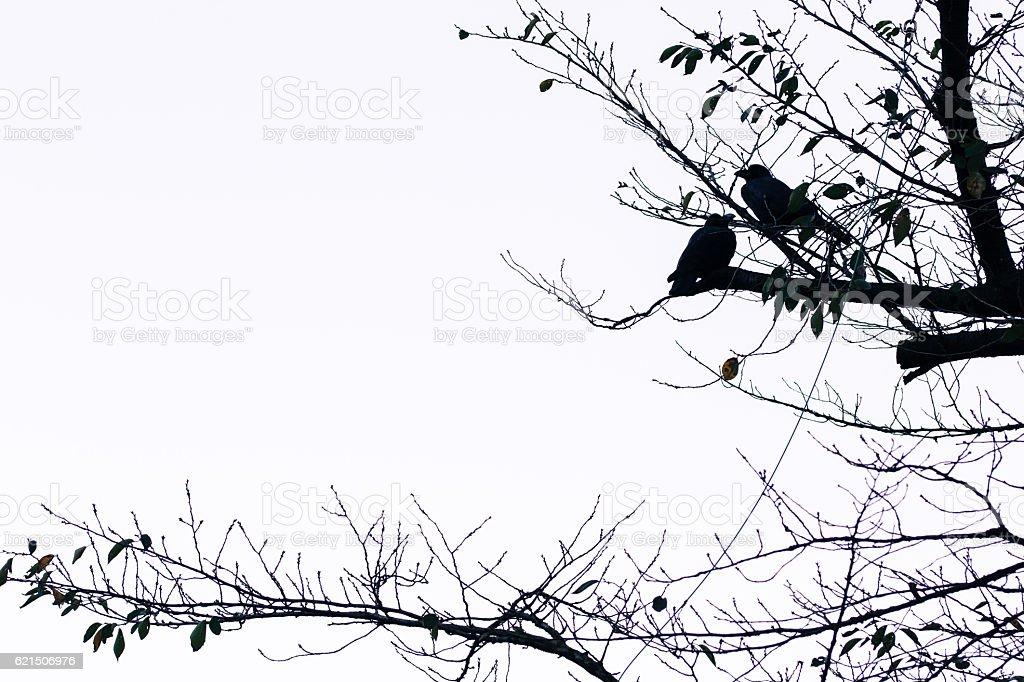 Vögel  Lizenzfreies stock-foto