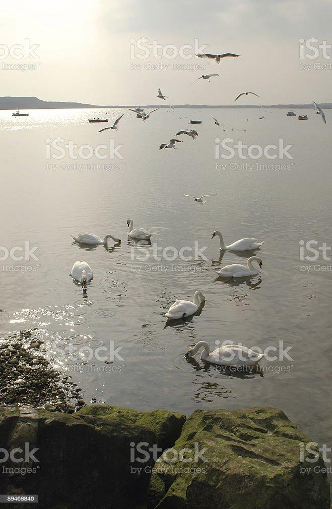 birds royalty-free stock photo