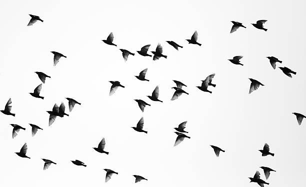 Birds picture id93491483?b=1&k=6&m=93491483&s=612x612&w=0&h=nvizptr  uyv7gq2fghnjx9xwp7pw19smdmooed4pqs=