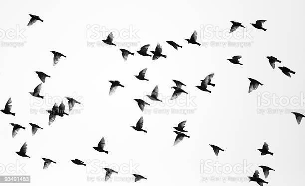 Photo of Birds