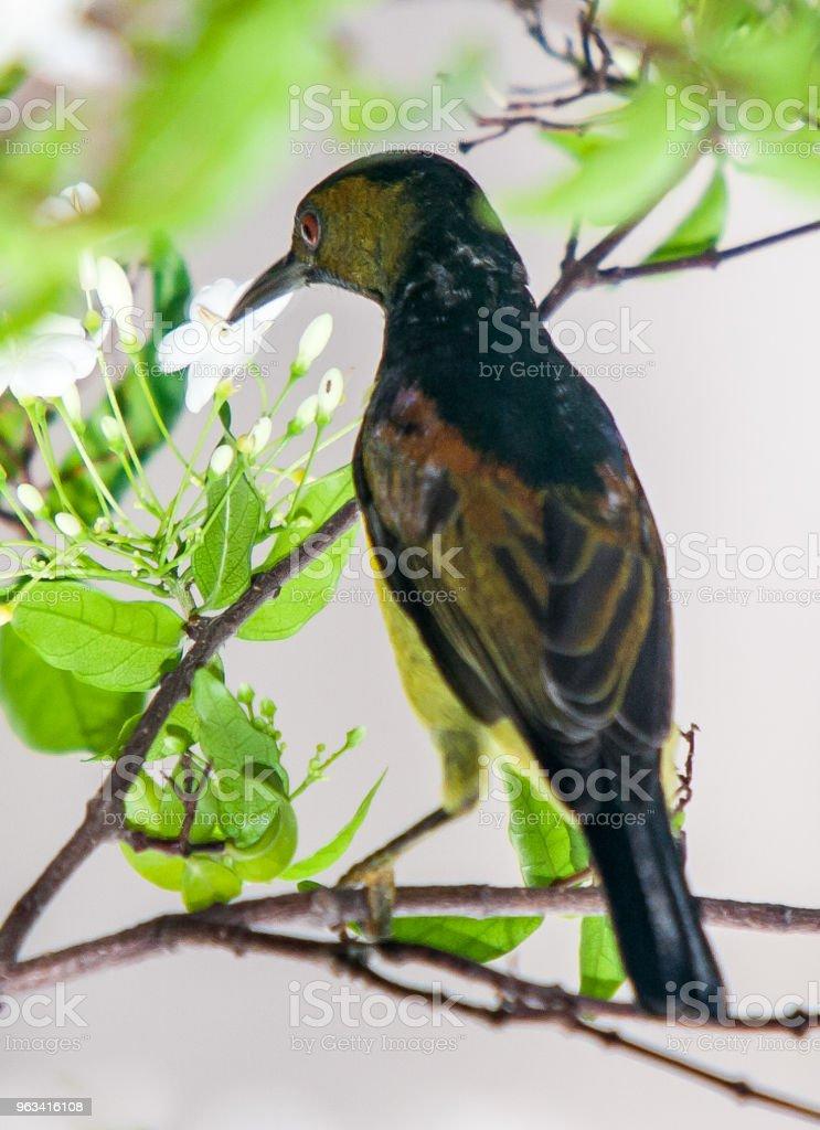 Des oiseaux  - Photo de Animaux à l'état sauvage libre de droits