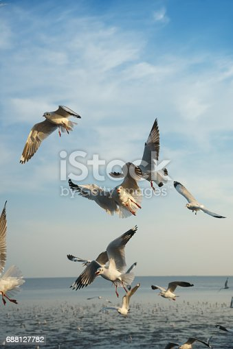 istock Birds racing to catch food 688127782