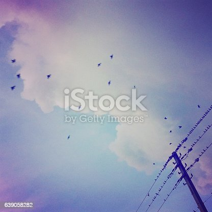 istock Birds Resting on Power Lines at Sunset 639058282