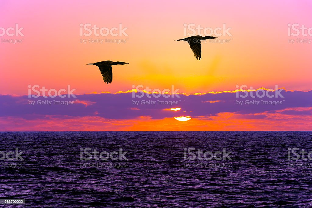 Birds silhouettes flying is two birds flying silhouetted against a...