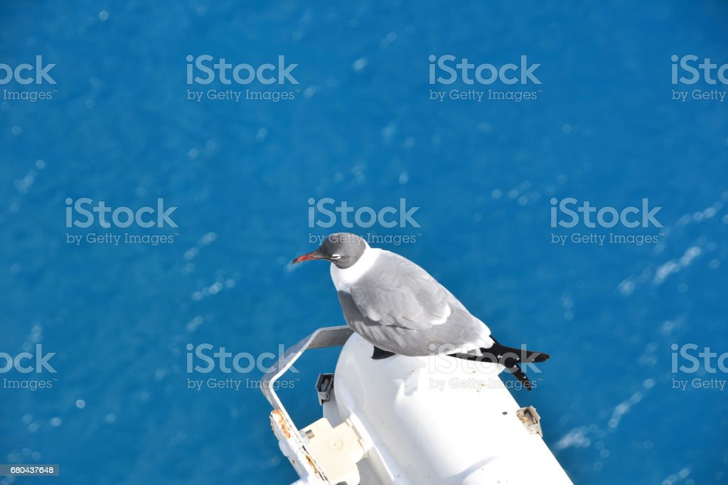 Birds sitting at the edge of the ship