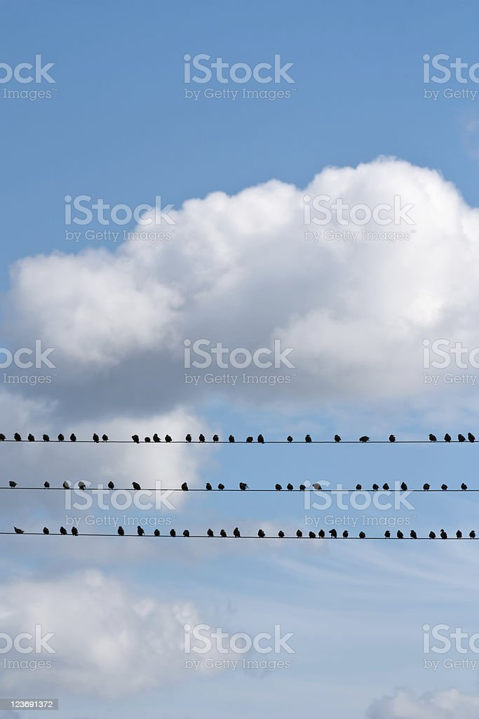 Birds Sitting on a Wire royalty-free stock photo