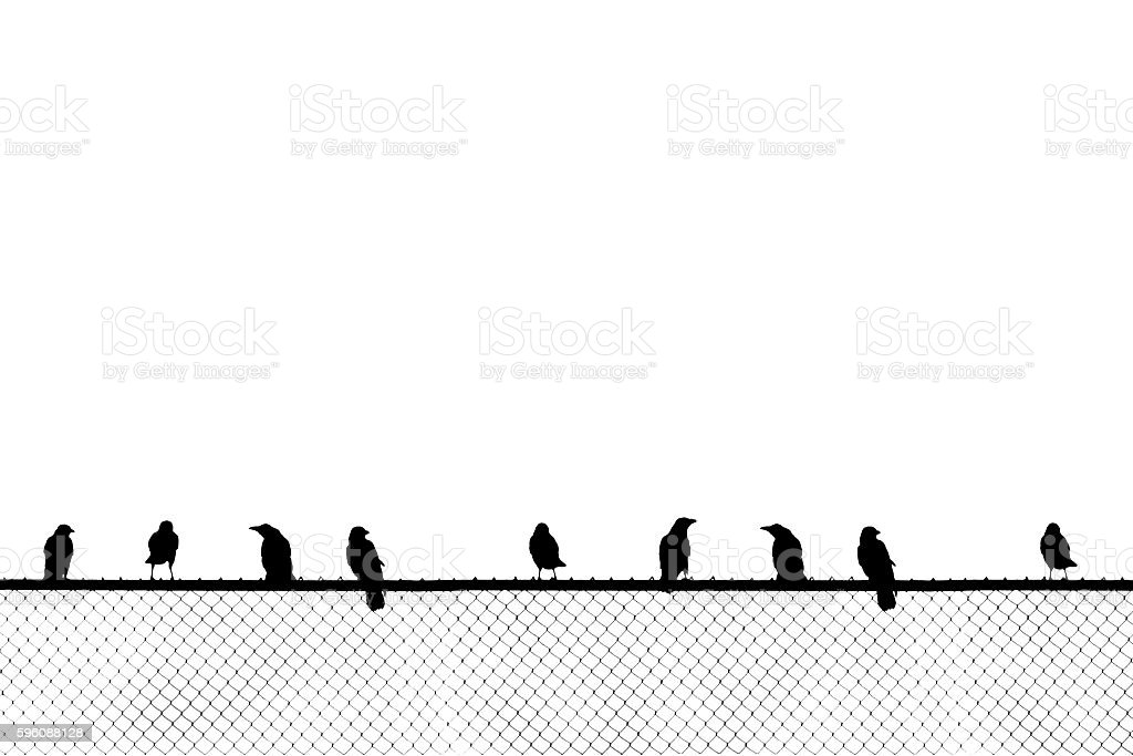 Birds sitting on chainlink fence stock photo