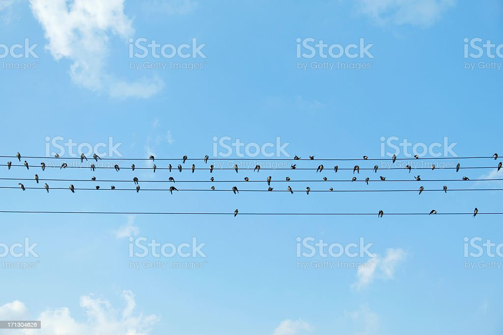Birds sitting on electrical wires against blue sky stock photo