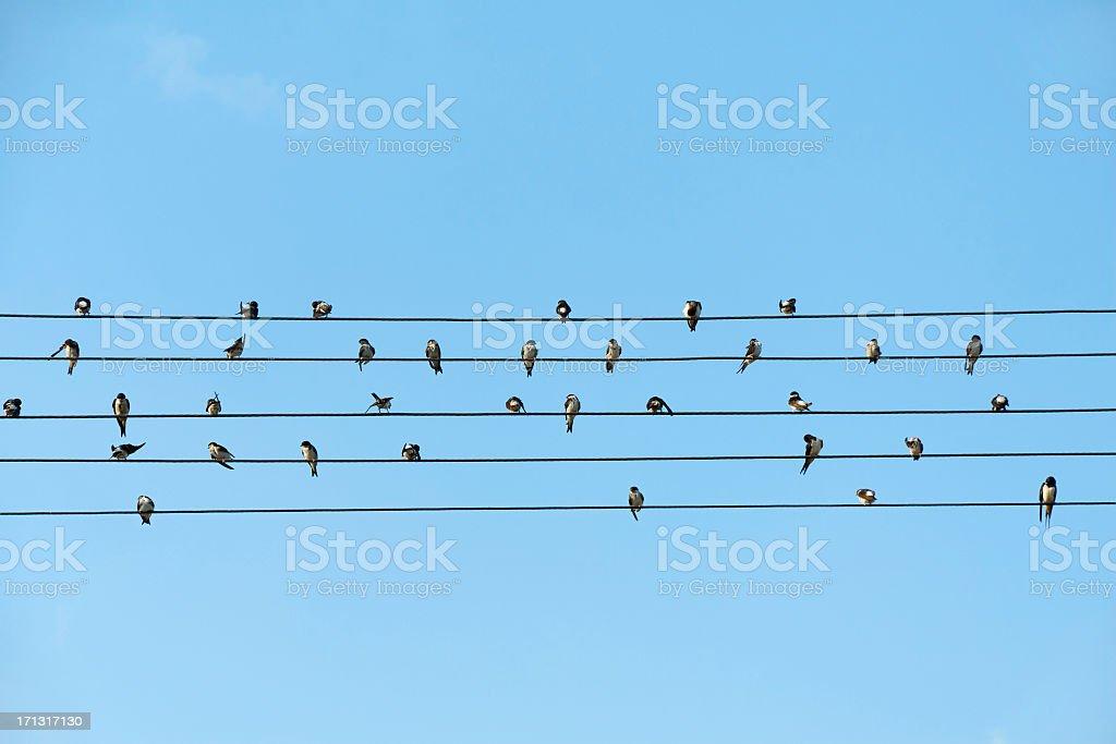 Vögel Sitzen Auf Elektrische Kabel Gegen Blauen Himmel Stockfoto ...