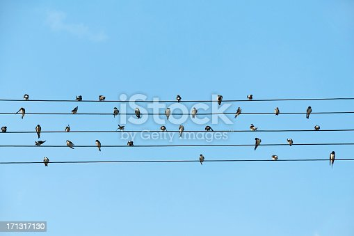 Birds sitting on electrical wires against blue sky