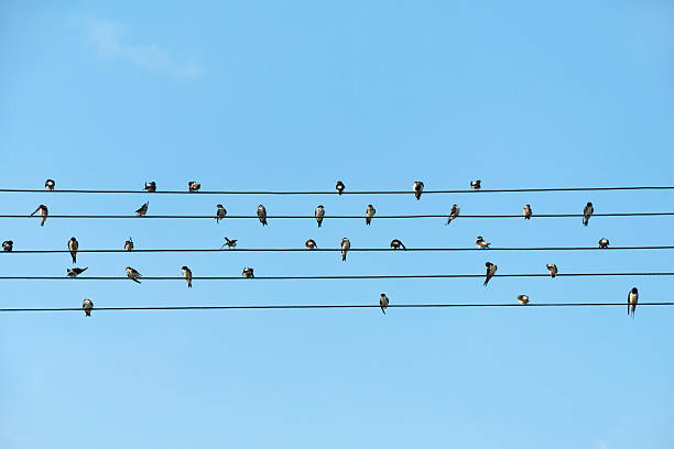 Birds sitting on electrical wires against blue sky Birds sitting on electrical wires against blue sky telephone line stock pictures, royalty-free photos & images