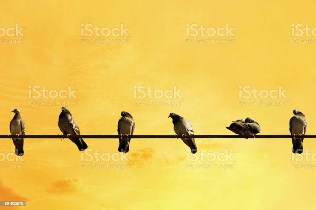 Birds sitting on power cable in yellow sky stock photo