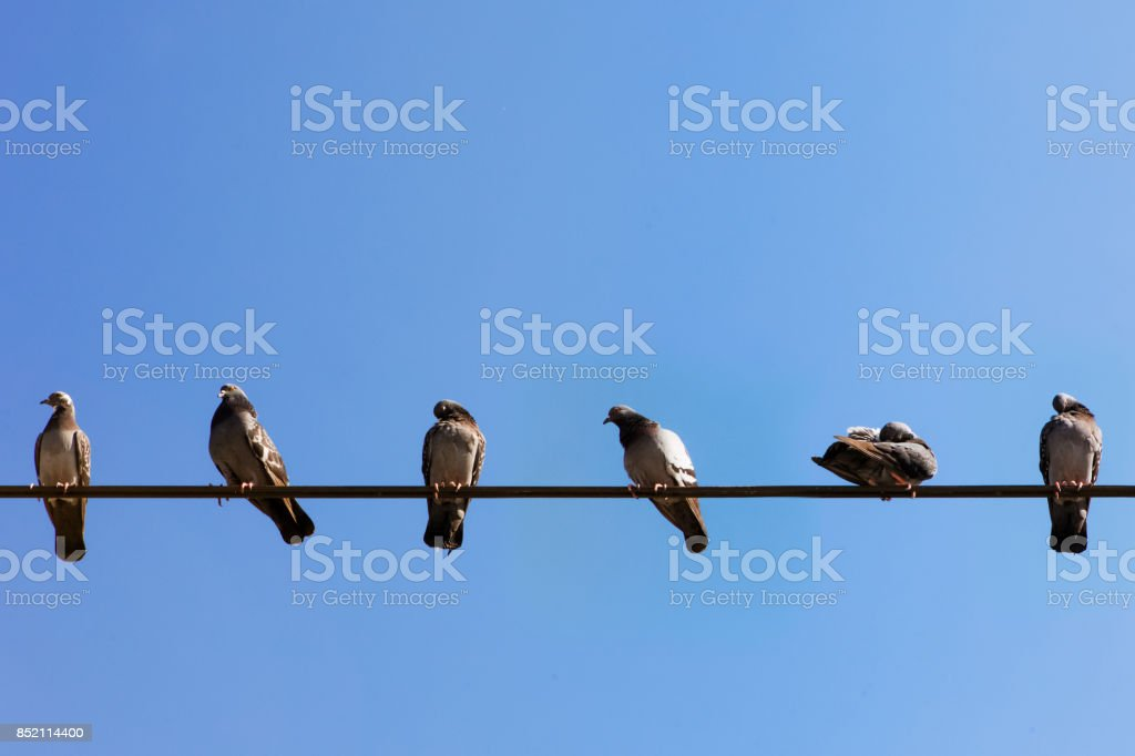 Birds sitting on the cable - Bird backgrounds stock photo