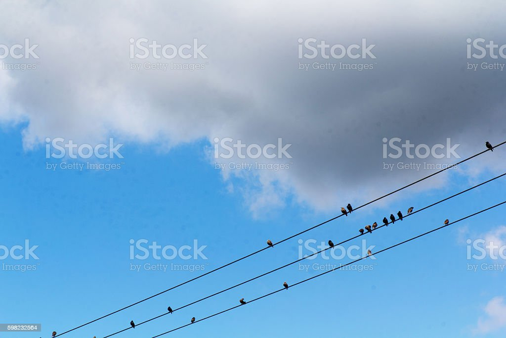 Birds sitting on wires against a blue sky foto royalty-free