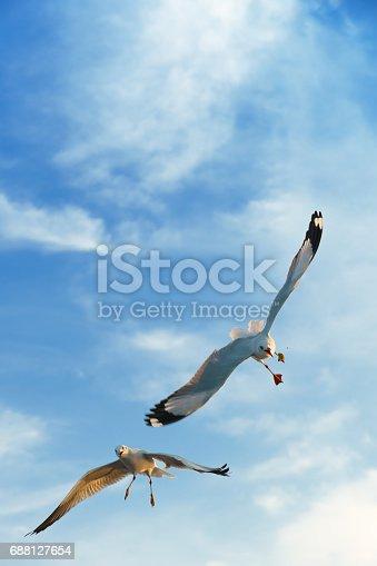 istock Birds snatching food in sky 688127654