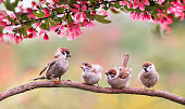natural background with birds sparrow with little chicks sitting on a wooden fence in the village garden surrounded by yab flowers they have a sunny day.