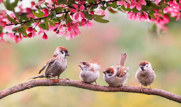 birds sparrow with little chicks sitting on a wooden fence in the village garden surrounded by yab flowers they have a sunny day - arto di animale arto foto e immagini stock