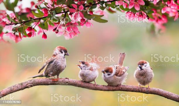 Photo of birds sparrow with little chicks sitting on a wooden fence in the village garden surrounded by yab flowers they have a sunny day