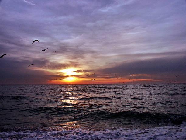 Birds & Sunset stock photo