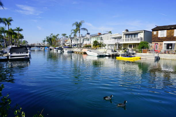 Birds swimming canal. The small black birds peacefully swimming in the Naples island canal, February 2018. long beach california stock pictures, royalty-free photos & images