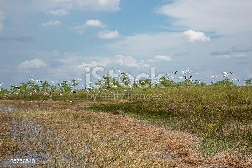 Birds taking flight in the Everglades National Park, Florida