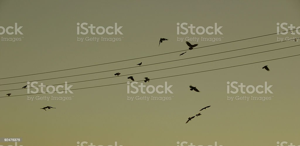 Birds & Wires royalty-free stock photo