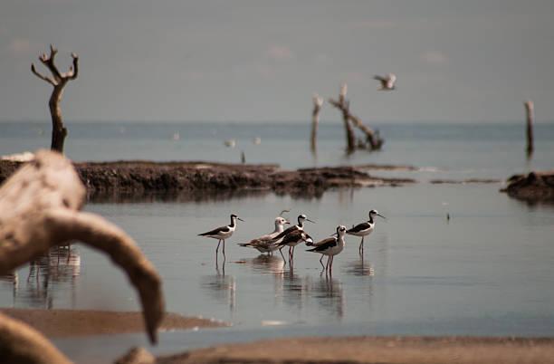 Aves con patas fino con árboles del mar muerto - foto de stock