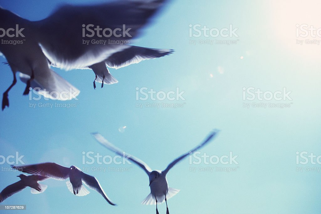 Birds with The SUN behind royalty-free stock photo
