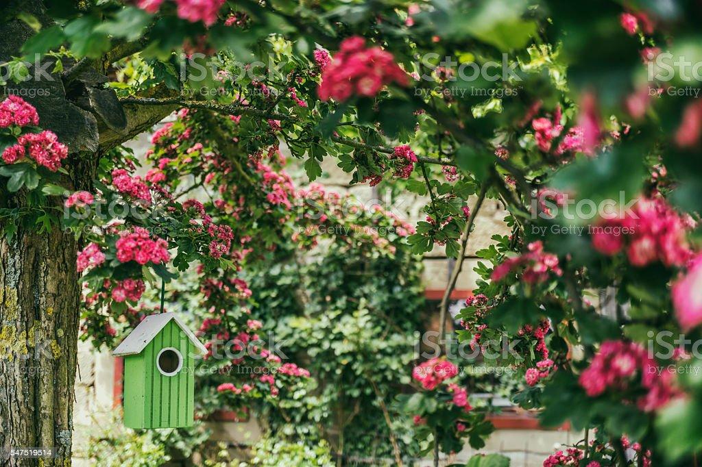 Birdshouse stock photo